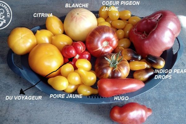 Recette Ma collection de tomates