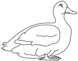 Parmentier de canard joli